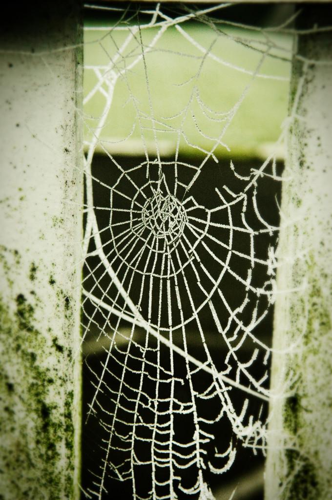 DSC_0028_web